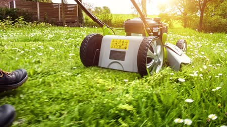 Cutting grass with petrol driven lawn mower in sunny garden. Full HD, 1080p
