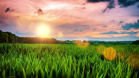 Beautiful sunset over wheat field. Slider shot, full HD, 1080p