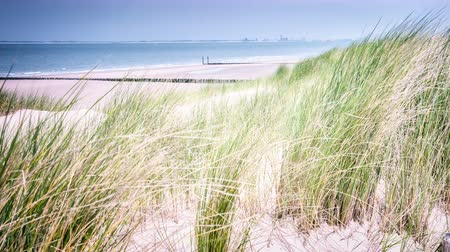 Summer seaside landscape with sand dunes. North sea coast. 4k, Ultra High Definition, Ultra HD, UHD, 2160P, 3840 x 2160