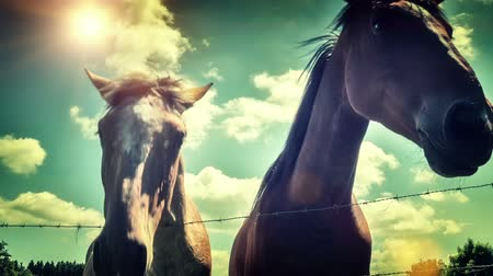 Closeup of young horses over blue sky background. Full HD, 1080p
