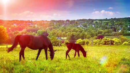 Summer landscape with farm horses at agricultural field. Full HD, 1080p