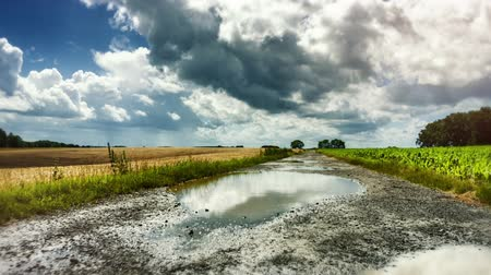 Walking the country road with big puddles on rainy summer day. Nature background. Full HD, 1080p Stok Video
