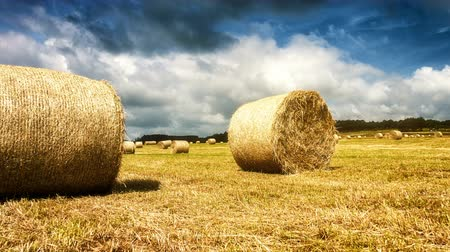 Agricultural landscape with golden hay bales on field. Slider shot, 4k, Ultra High Definition, Ultra HD, UHD, 2160P, 3840 x 2160