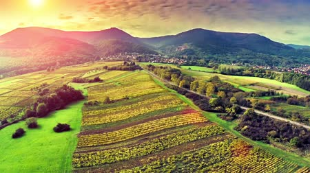 Aerial view of vineyard meadow in Alsace, France. Agricultural concept. Full HD, 1080p Stock Footage