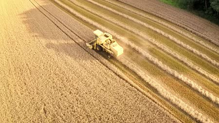 Aerial view of combine harvester at work in a wheat field. Full HD, 1080p