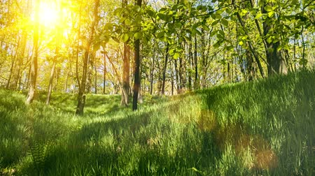 Beautiful landscape of summer green forest. Nature background. Full HD, 1080p