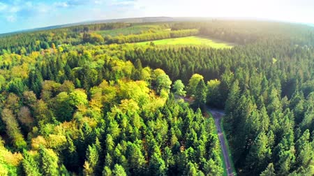 Aerial view of autumn forest. Full HD, 1080p