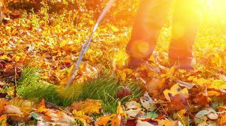 Gardener raking dry leaves in autumn garden. Autumn garden background. 4K, Ultra High Definition, Ultra HD, UHD, 2160P, 3840 x 2160 Stock Footage