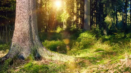 Forest landscape at sunny summer day. Nature background. Slider shot. Full HD, 1080p Stock Footage