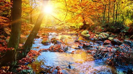 Autumn landscape with forest stream. Fall nature background. Full HD, 1080p