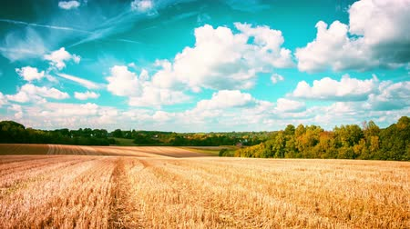 Landscape with golden wheat field at sunny day, timelapse. 4k, Ultra High Definition, Ultra HD, UHD, 2160P, 3840 x 2160