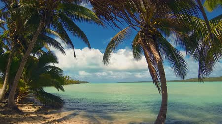 Полинезия : Aitutaki Lagoon Panoramic Time Lapse Of Tropical Beach Reef And Coconut Palm Trees Swaying In Windy Cloudy Sky Over Blue Lagoon And White Sand And Ocean In The Cook Islands Polynesia South Pacific Стоковые видеозаписи