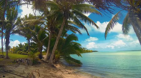 폴리네시아 : Aitutaki Lagoon Time Lapse Of Tropical Beach Reef And Coconut Palm Trees Swaying In Windy Cloudy Sky Over Blue Lagoon And White Sand And Ocean In The Cook Islands Polynesia South Pacific