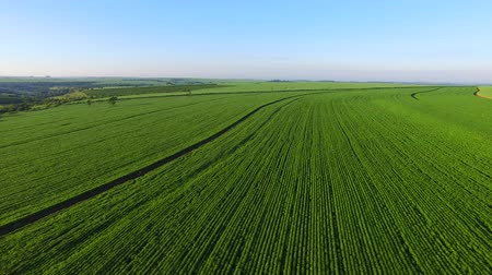 farm in brazil : Aerial soybean plantation in Sao paulo State - Brazil