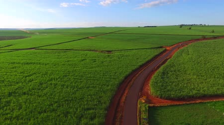 cropland : sugar cane plantation in sunset in Brazil - aerial view - Canavial Stock Footage
