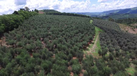 farm in brazil : Aerial view of olive grove and soil ploughed in Brazil.