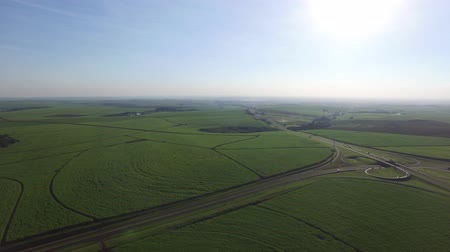 farm in brazil : Aerial sugarcane field in Ribeirao Preto, Brazil.