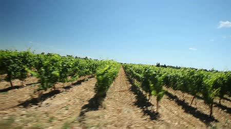 winnica : Slow motion - Driving past vineyard in the south of France.
