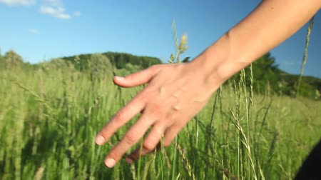 çim : Woman walking touching long grass in field in summer on blue sky Stok Video