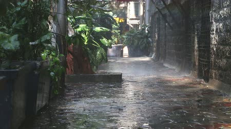 ulewa : Rain falling on plants in empty street in Mumbai.
