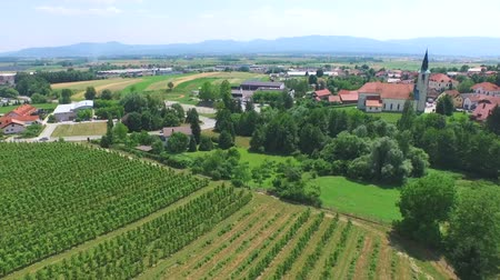 winnica : Beautiful aerial landscape of vineyard fields in Slovenia.