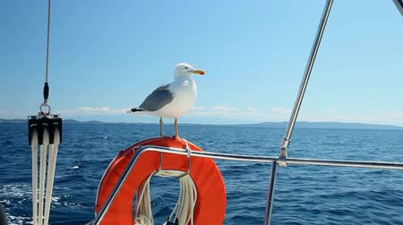 żaglowiec : Seagull sitting on sailboat railing enjoying the ride Wideo