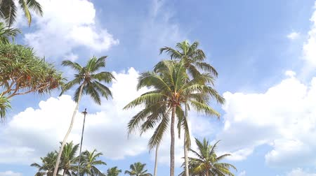coconut palm tree : Sky view of palm trees in the light wind and clouds passing by.