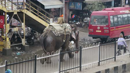 caused : AMRITSAR, INDIA - 2 MARCH 2015: Man sitting on back of elephant walking down the street in Amritsar.