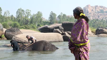 elefant : HAMPI, INDIA - 28 JANUARY 2015: Woman looking at Lakshmi the elephant lying in the the river while being washed.