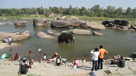 elefant : HAMPI, INDIA - 28 JANUARY 2015: People looking at the elephant in the river.