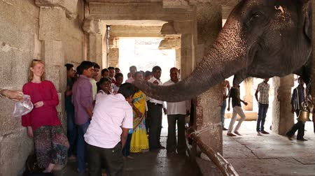 anıt : HAMPI, INDIA - 28 JANUARY 2015: Tourists looking at the playful temple elephant Lakshmi in temple. Stok Video