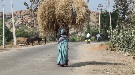 головной убор : HAMPI, INDIA - 28 JANUARY 2015: Indian woman walks and carries hay on her head. Стоковые видеозаписи
