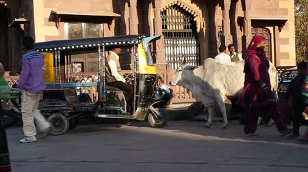 local population : JODHPUR, INDIA - 11 FEBRUARY 2015: Cow standing by rickshaw at street in Jodhpur, with people and vehicles passing. Stock Footage
