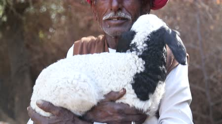 portre : JODHPUR, INDIA - 13 FEBRUARY 2015: Portrait of local Indian man with turban holding a lamb in his hands.
