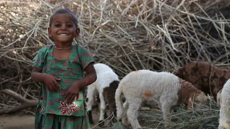 indian ethnicity : JODHPUR, INDIA - 13 FEBRUARY 2015: Portrait of beautiful Indian girl standing by sheep in back yard. Stock Footage