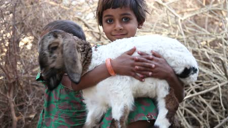 cordeiro : JODHPUR, INDIA - 13 FEBRUARY 2015: Portrait of two Indian girls, one holding a lamb in her hands. Vídeos