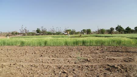obec : JODHPUR, INDIA - 13 FEBRUARY 2015: Panoramic view of rural field in Jodhpur, with man walking aside. Dostupné videozáznamy