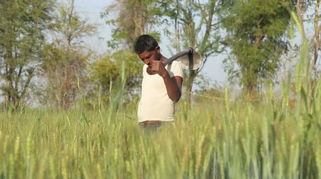 cultivo : JODHPUR, INDIA - 13 FEBRUARY 2015: Local man standing at wheat field with a hoe on his shoulders.