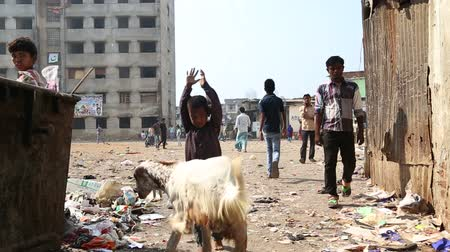 yoksulluk : MUMBAI, INDIA - 12 JANUARY 2015: Child playing with a goat in a dirty street in Mumbai. Stok Video