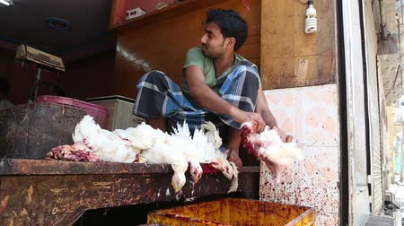 matar : VARANASI, INDIA - 20 FEBRUARY 2015: Men twitching feathers of slaughtered chicken in workshop in Varanasi.