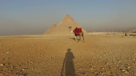 wielbłąd : Mans shadow approaching to camel at Giza pyramids, Cairo, Egypt