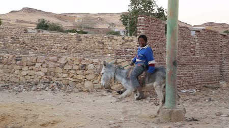 aswan : ASWAN, EGYPT - FEBRUARY 7, 2016: Young local boy riding a donkey on the street Stock Footage