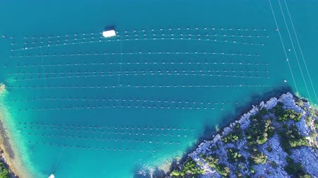 měkkýš : Aerial view of shell farming in turquoise clear sea of Croatia