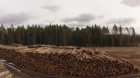 woodcut : Raw Wood Storage, air view, camera up and down Stock Footage