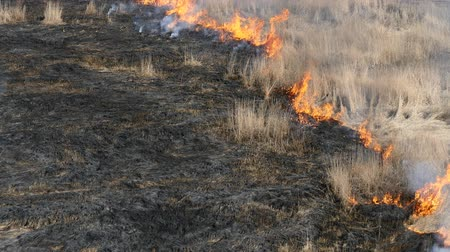 slash and burn : Burning old grass