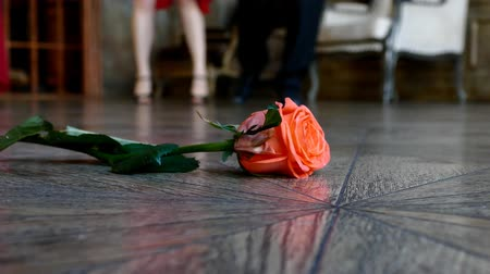 Пол : Red rose on the floor on dancing people background Стоковые видеозаписи