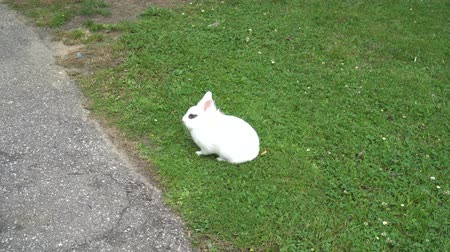 rabbits : White eyes next to the asphalt road