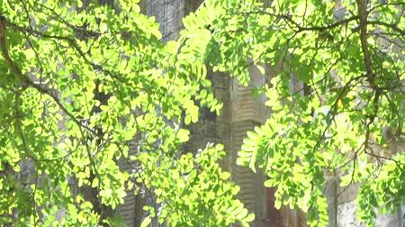 The Catholic Church of the Holy Cross Green foliage lit by the sun in the foreground Archivo de Video