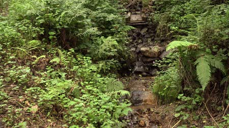 kapradina : A stream with a rocky channel and a waterfall in a wild forest with fern