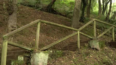 subir escalera : old concrete staircase with log handrails in the wild forest leading up